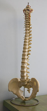 Casper the Skeleton